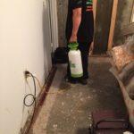 Mold Remediation NYC
